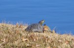 Debra Caffey; Captured in the Moment; Turtles