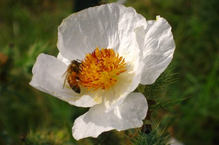 Wildflower and Bees